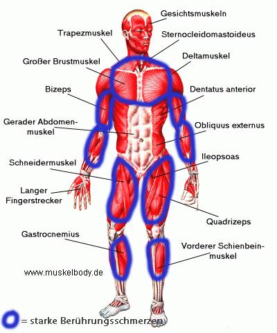 Muskeln_berührung