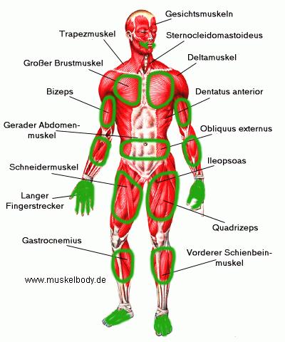 Muskeln_krämpfe